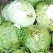 Fresh Cabbage Green