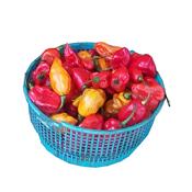 Fresh Pepper Small Basket